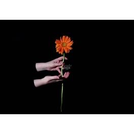 Un fiore sospeso