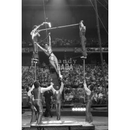 Circus V