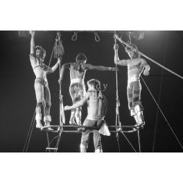 Circus VI