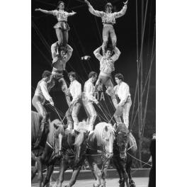 Circo VII