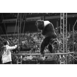 Circus IX