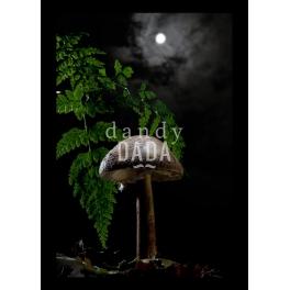 Nocturnal VI