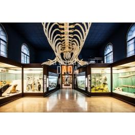 Scheletro di balena volante
