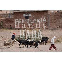 Argentines Pastores