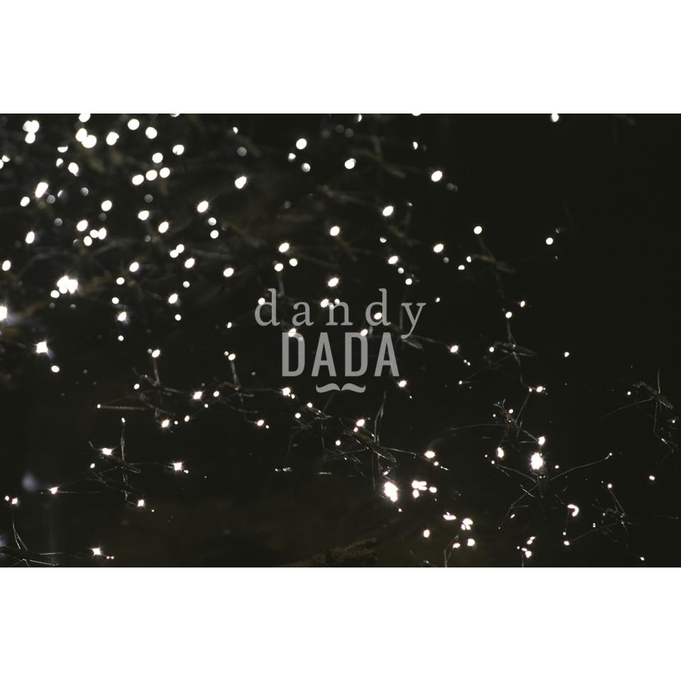 Luce stellare