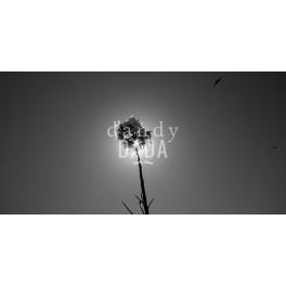 Flower Eclipse